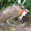 How to Prevent Heron Theft