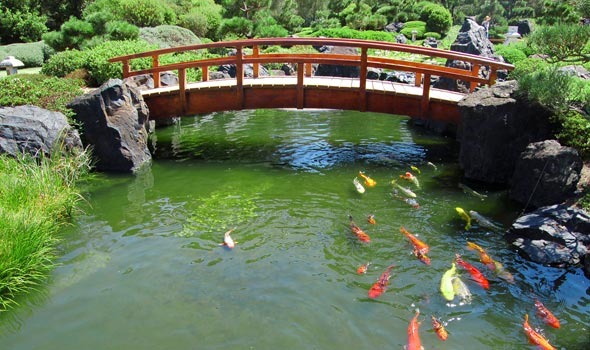 Koi Fish Essentials Useful Information For The Koi Enthusiast